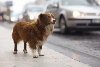 Justiça determina que prefeitura de Natal faça castração em cães e gatos