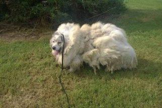 Após seis anos, cão ganha tosa e perde mais de 15 quilos