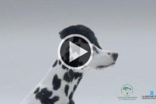 Marca usa pets em campanha de prevenção ao câncer de pele