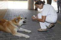 Cão espera tutora por seis dias na porta de hospital