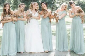 Em casamento, buquês são substituídos por filhotes resgatados