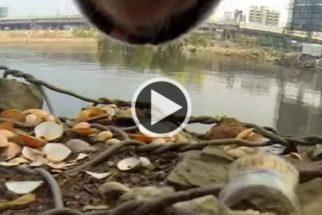 ONG põe câmera em cão de rua para mostrar sua dura rotina