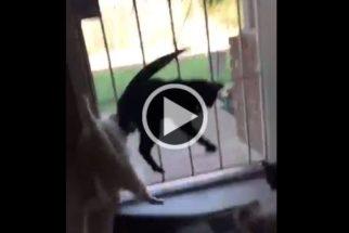 Para rir: cãozinho dá grande susto em gatos que observavam pássaro