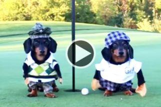 Para rir: dupla de salsichinhas decide sair para jogar golfe