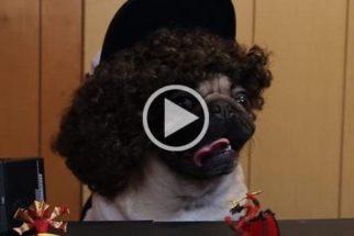 Para rir: pug estrela paródia da série Stranger Things