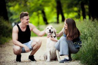 Pesquisa revela que cães gostam mais de elogios do que de comidas