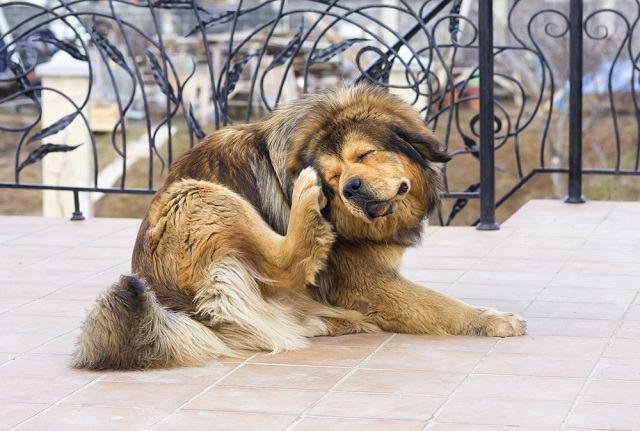 Receita caseira é a solução para desparasitar um cão