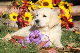 Saiba como ensinar o seu cão a não morder plantas