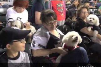 Time de baseball leva mais de mil cães para torcida e bate recorde