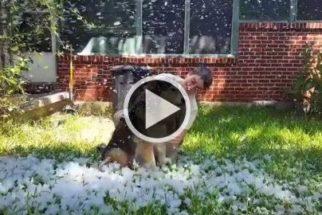 Tutora faz seu cão em estado terminal ver neve pela última vez