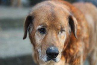 Graças ao Facebook, tutores encontram cão que fugiu há dois anos