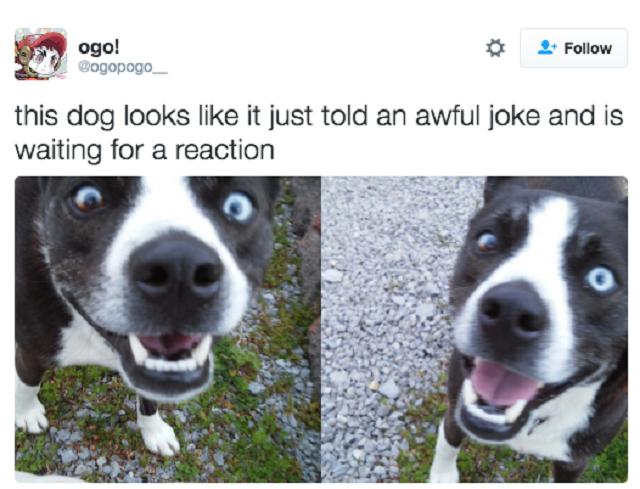 tweet-hilario-cachorro-agindo-como-humano