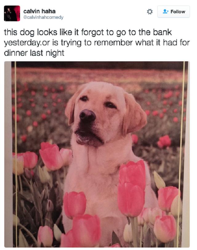tweet-hilario-cachorro-agindo-como-humano1