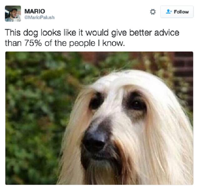 tweet-hilario-cachorro-agindo-como-humano2
