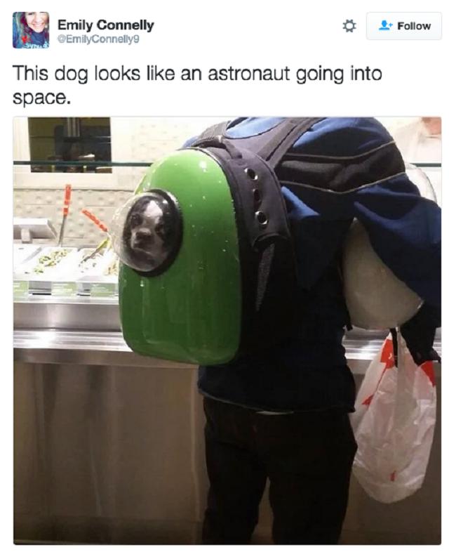 tweet-hilario-cachorro-agindo-como-humano3