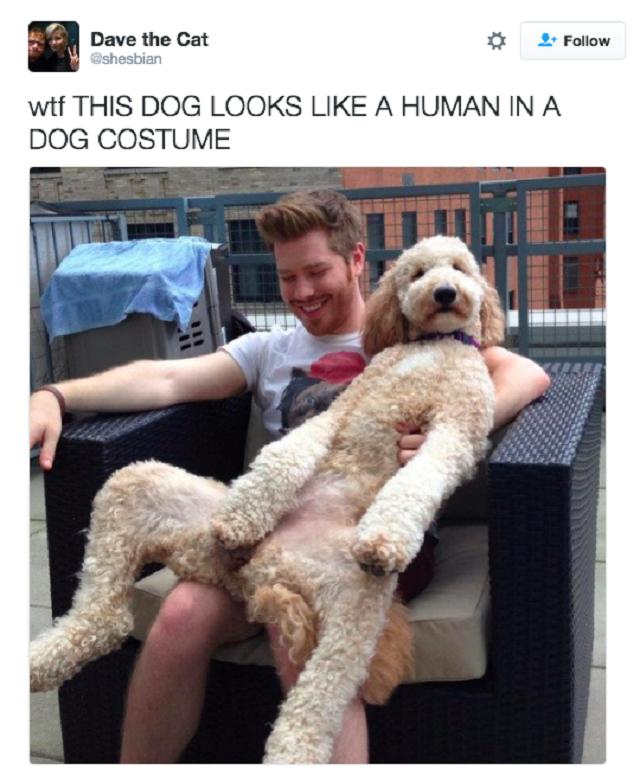 tweet-hilario-cachorro-agindo-como-humano5