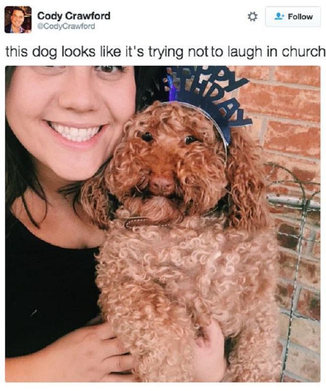 tweet-hilario-cachorro-agindo-como-humano9