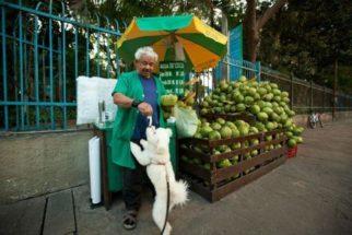 Vendedor ambulante recepciona cães com água de coco em SP