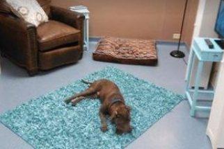 Abrigo cria quartos temáticos para cães se sentirem em casa