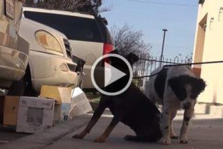 Após morte de tutor, cães passam 18 meses em situação de abandono