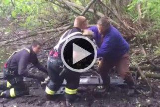 Bombeiros salvam cachorro que estava submerso na lama
