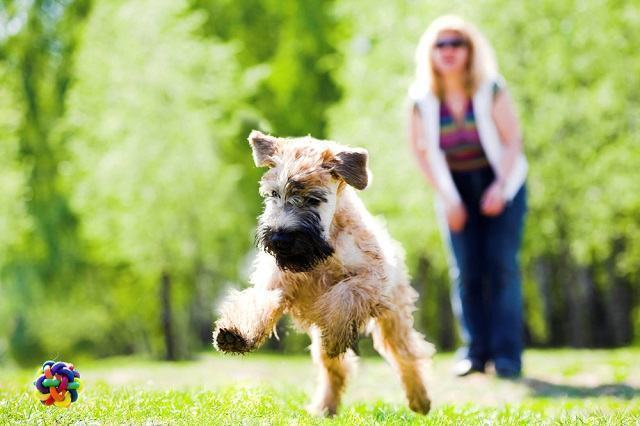 Brincadeiras que tiram o cão do tédio e treina seus instintos