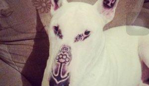 bull-terrier-teve-rosto-tatuado-por-dono