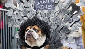 bulldogue-buford-em-um-trono-de-ossos