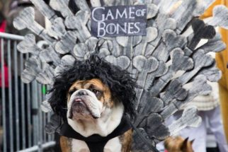 Cãozinho é um forte concorrente a rei em Game of Thrones