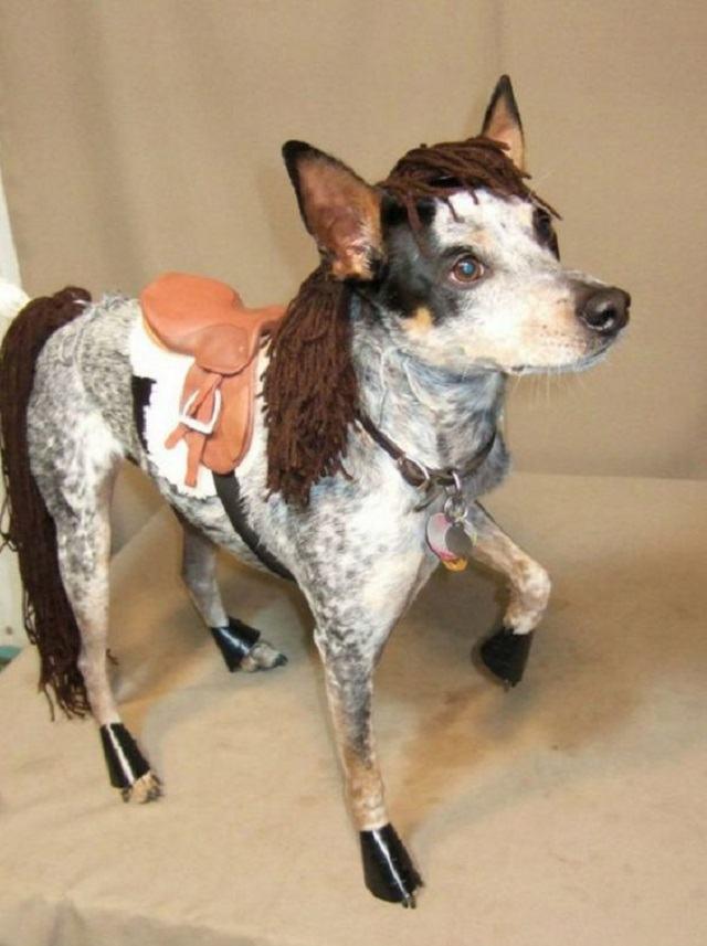 cachorro-com-fantasia-de-ponei