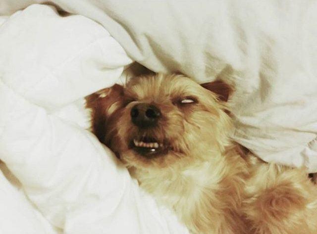 cachorro-com-olhos-virados-enquanto-dorme