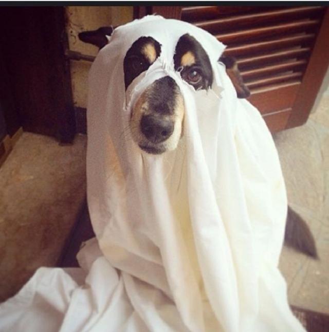 cachorro-fantasiado-de-fantasma