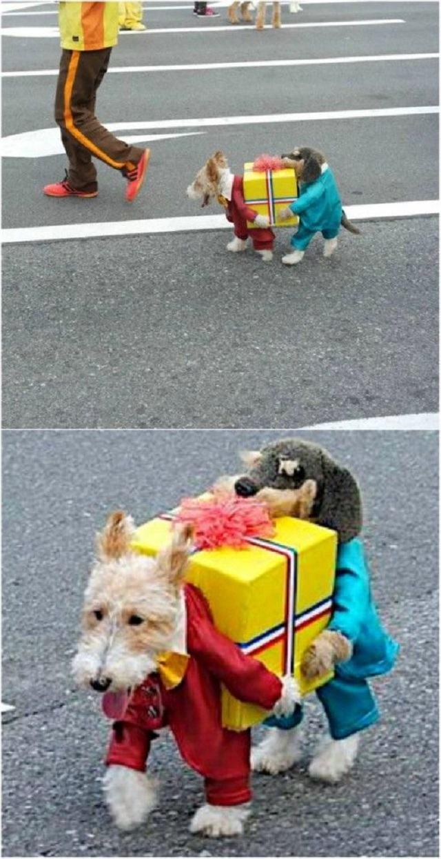cachorro-vestido-de-carregador