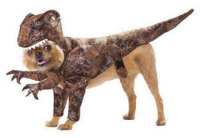 cachorro-vestido-de-dinossauro