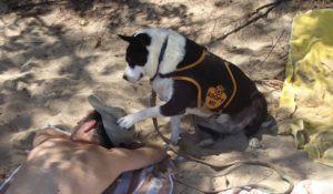 cachorros-podem-ser-adotados-por-um-dia-em-ong-do-havai