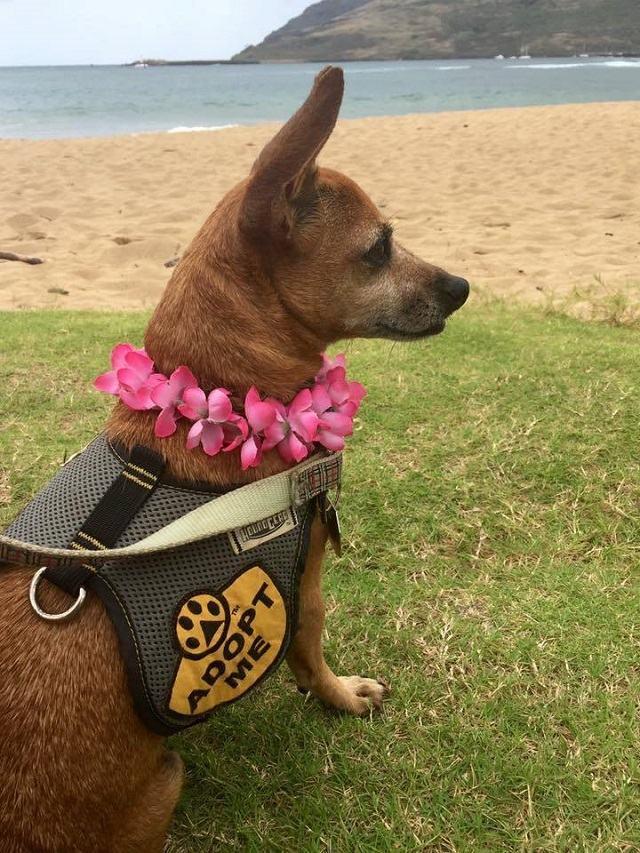 cadela-adotada-por-um-dia-dando-passeio-na-praia
