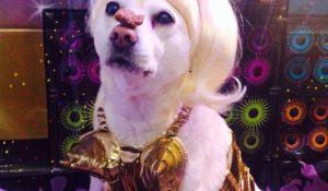 cadela-com-fantasia-de-madonna