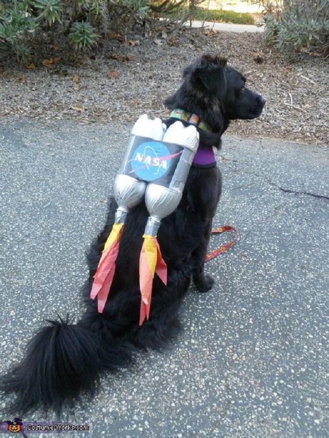 cadela-fantasiada-de-astronauta