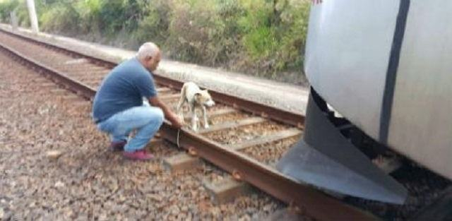 cadela-idosa-e-presa-em-trilhos-de-metro-em-recife