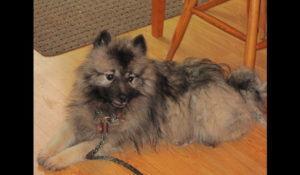 cadela-que-sbreviveu-seis-meses-em-regiao-selvagem