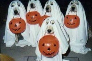 Cães com fantasias de halloween bombando no Instagram