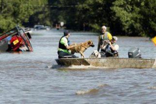 Voluntários invadem casas para salvar animais vitimas de furacão