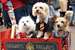 Nova York tem desfile canino de Halloween. Veja as fotos