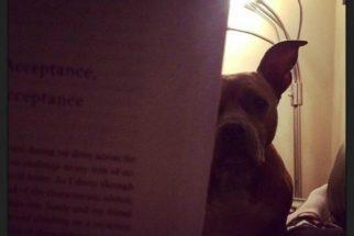 12 fotos que mostram como é ter um cãozinho que não sai do seu pé