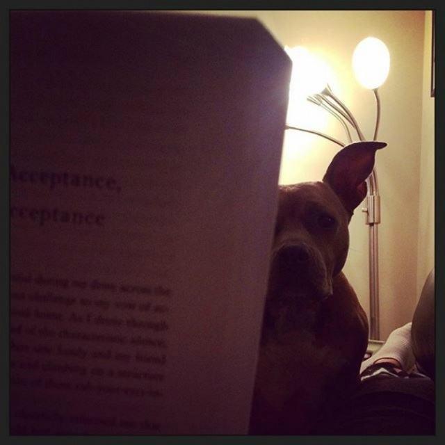 cao-curioso-para-saber-o-que-tutor-esta-lendo