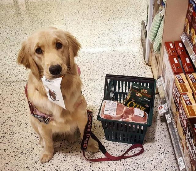 cao-de-assistencia-ajudando-o-tutor-a-fazer-compras