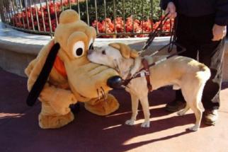 10 fotos de cães de assistência que são os melhores companheiros