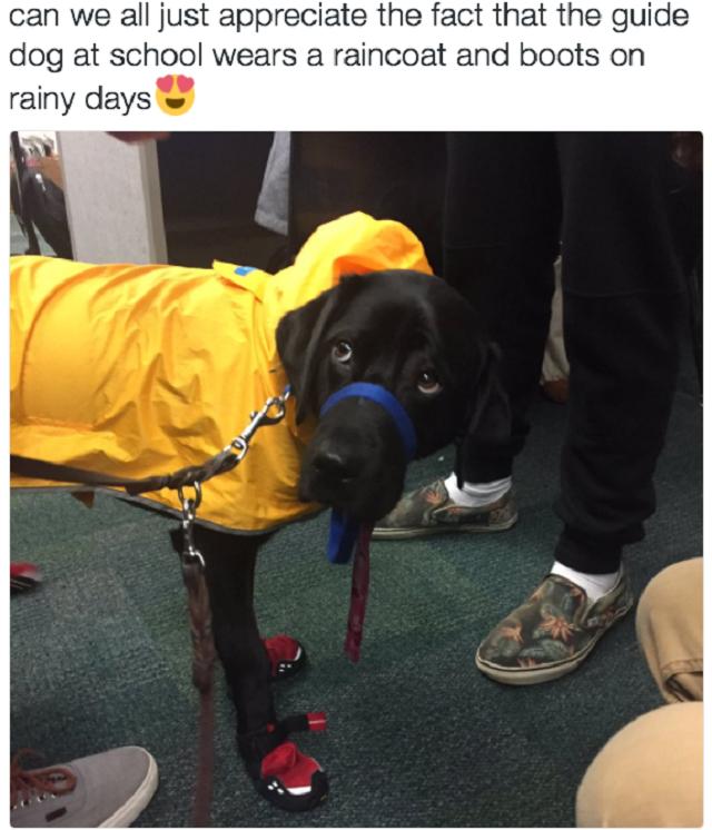 cao-de-servico-usando-capa-de-chuva-e-botas
