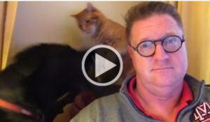 cao-e-gato-discutem-enquanto-tutor-tenta-assistir-a-tv