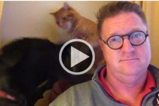 Cão e gato 'discutem' enquanto tutor tenta assistir a TV